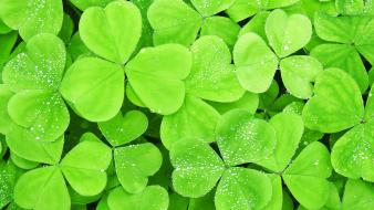 Four leaf clover background wallpaper