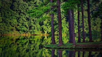 Green forest lake wallpaper