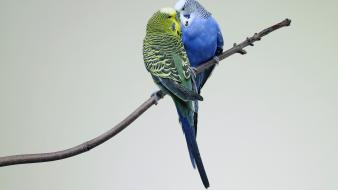 Love bird wallpaper