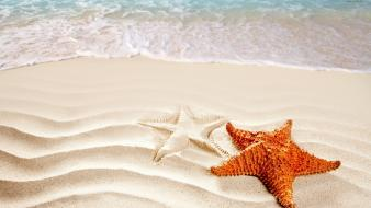 Sand starfish Wallpaper