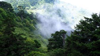 Taiwan forests hills mountains nature Wallpaper