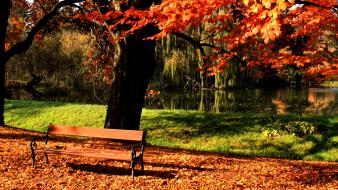Autumn bench fallen leaves trees wallpaper