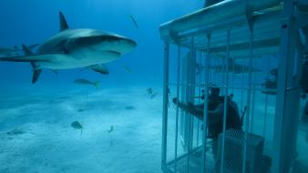Cage diving sharks underwater wallpaper