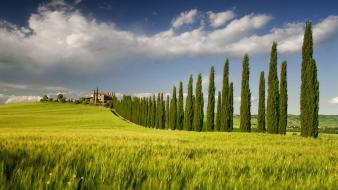 Campania italy cypress tree fields green wallpaper