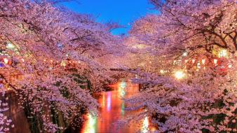 Cherry blossoms pink trees wallpaper