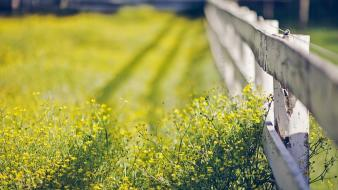Depth of field fences flowers nature wooden fence wallpaper