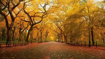 Fall foliage pictures wallpaper