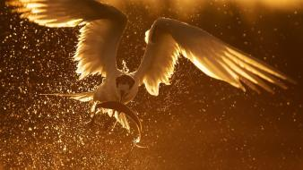 Golden sun birds fish predator wallpaper