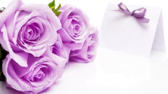 Purple rose love wallpaper