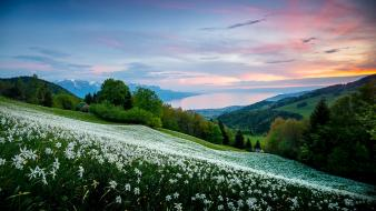 Switzerland flowers hills landscapes meadows wallpaper