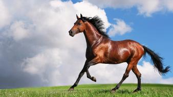 Animals brown horses nature running Wallpaper