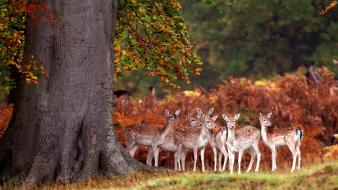 Animals deer fawn mammals nature wallpaper