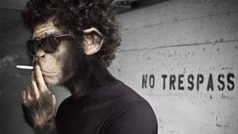 Artistic cigarettes monkeys smoking wallpaper