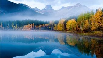 Autumn fog forests landscapes mist wallpaper