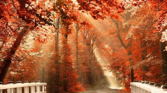 Autumn forests nature outdoors red wallpaper