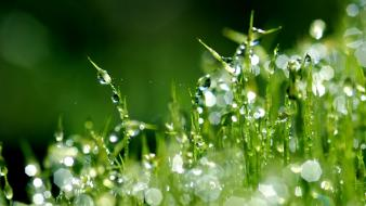 Beautiful morning dew wallpaper