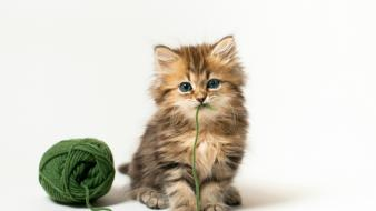 Ben torode animals cats cubs domestic cat wallpaper