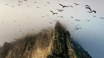 Birds clouds flock fog wallpaper