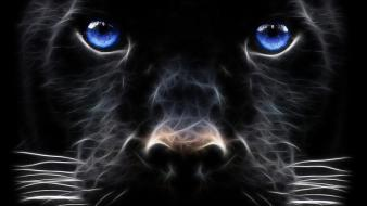 Blue eyes panthers wallpaper