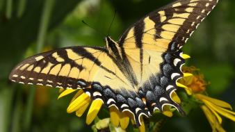 Butterflies yellow flowers wallpaper