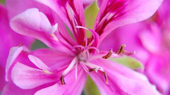 Close-up depth of field flowers nature pink wallpaper