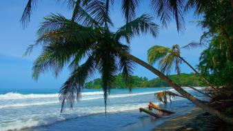 Costa rica beaches nature palm trees summer Wallpaper