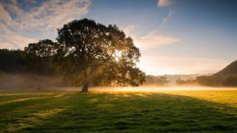 Early morning fog grass landscapes nature wallpaper