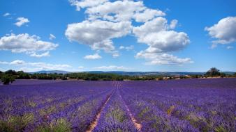 France landscapes lavender nature provence wallpaper
