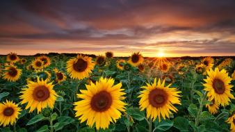 Garden landscapes magic nature sunflowers wallpaper