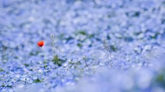 Japan blue flowers bokeh depth of field Wallpaper