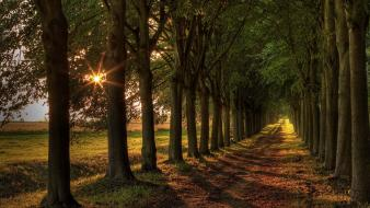 Sun beams boulevard landscapes nature wallpaper