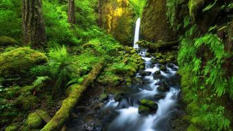 Trunks creek forests green grotto wallpaper