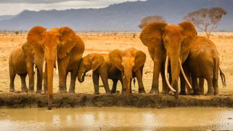 Wild africa animals elephants wildlife wallpaper