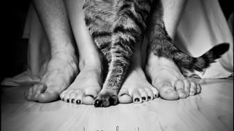 Animals cats feet grayscale greyscale wallpaper