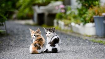 Animals cats kittens wallpaper