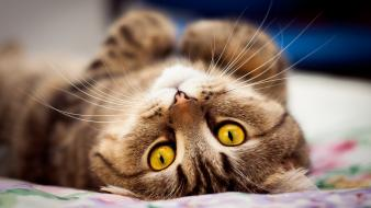 Animals cats upside down yellow eyes wallpaper
