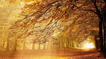 Autumn leaves fallen golden landscapes wallpaper
