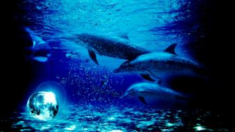 Blue moon fantastic digital art dolphins wallpaper