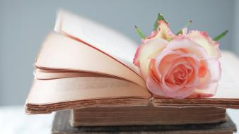 Books roses wallpaper