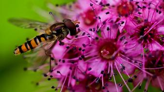 Close-up flowers insects nature pink wallpaper