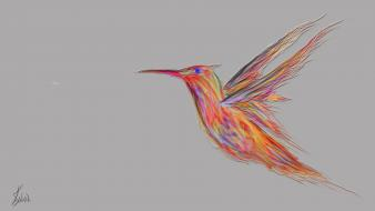 Colibris bird wallpaper