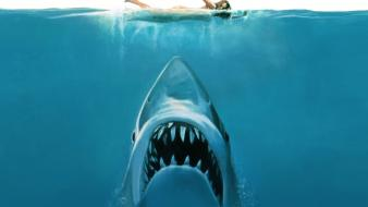 Concept art funny jaws sharks swimming wallpaper