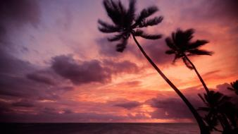 Dominican republic palm trees sea silhouettes sunset wallpaper