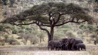 Elephants trees wallpaper