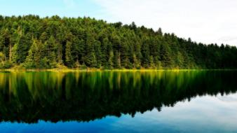Forests lakes landscapes water wallpaper