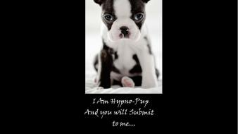 Funny hypno puppies wallpaper