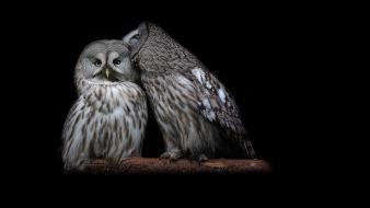 Birds owls strix nebulosa wallpaper
