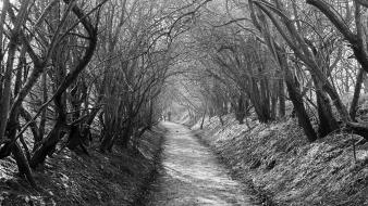 Black and white forests monochrome spooky wallpaper