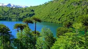 Chile blue forests green lagoon wallpaper