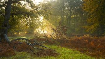 Country forests landscapes nature sunbeams wallpaper